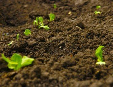 Análisis de suelo agrícola para planes de abonado