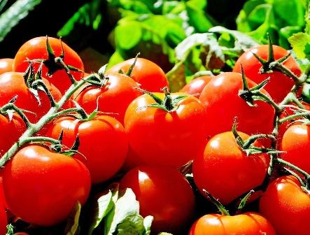 calcio ligado tomates