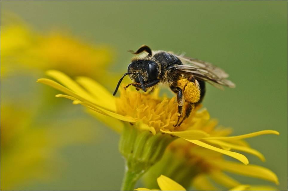test de toxicidad en abejas