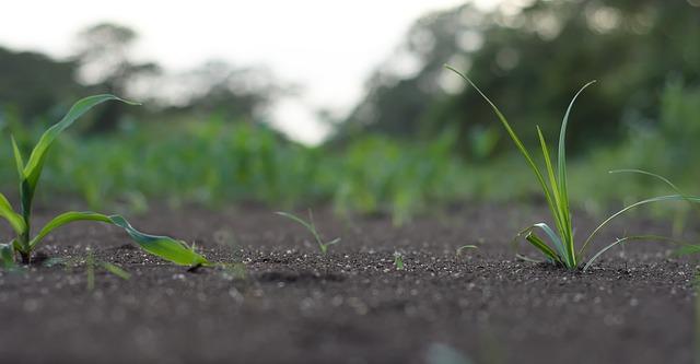 Análisis de suelo agrícola