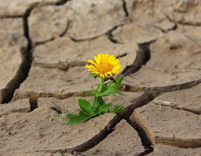 Biodiversidad de suelos foto