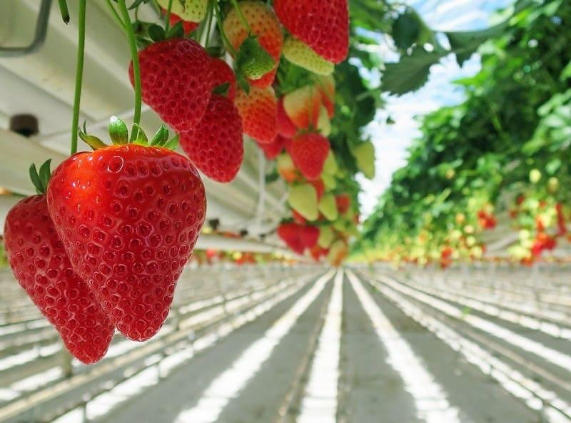 Servicios analiticos para agricultura y agronomia
