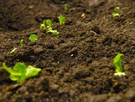 analisis de suelo abonado