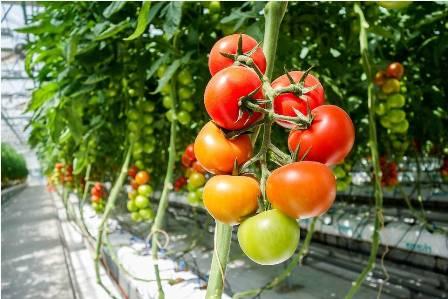 fertirrigacion en cultivos horticolas