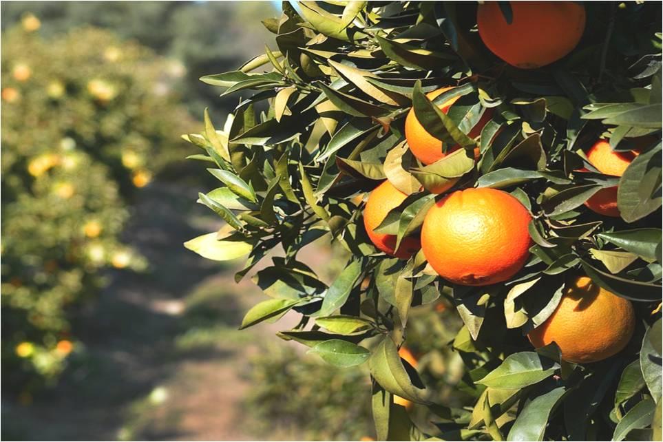fondos operativos para frutas y hortalizas